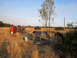 Algunos de los burros que tiran del tren. / Foto J.M.