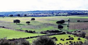 Paisaje en las inmediaciones de Villavieja de Yeltes./ Foto J.M.