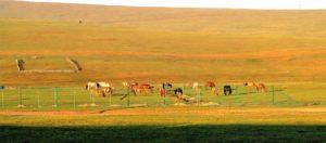 La estepa de Mongolia desde el tren./ Foto J.M.