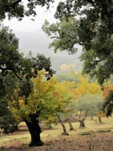 El bosque pintado./ Foto J.M.