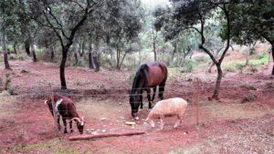 """Las """"tres gracias"""" del reino animal toman su pan./ Foto J.M"""
