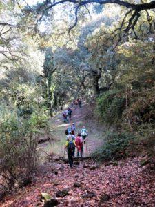 Por el bosque encantado. / Foto J.M.