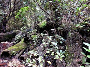 Abrazo entre troncos./ Foto J.M.