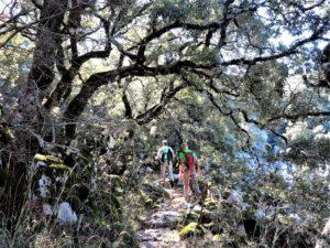 Como andando por la selva./ Foto J.M.