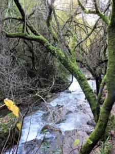 El río Majaceite./Foto J.M.