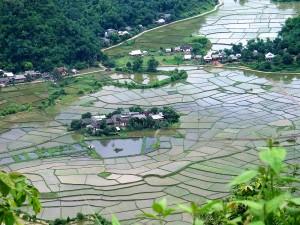 002. Vietnam, campos de arroz