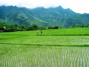 003. Arrozales, Vietnam