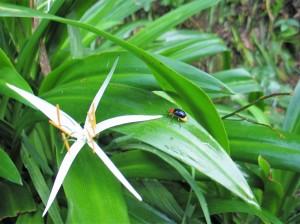 008. Vida y naturaleza, Sapa, Vietnam.