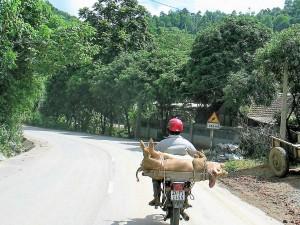009. Por las carreteras vietnamitas