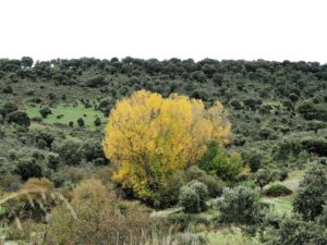 Paisaje en la comarca del río Yeltes (Salamanca)/ Foto Joaquín Mayordomo