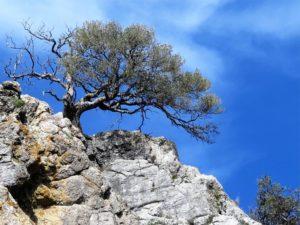 La fuerza, el árbol y la roca./ Foto J.M.