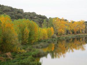 Ribera del río Tormes./ Foto Joaquín Mayordomo