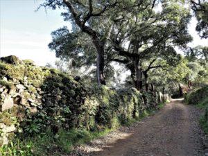 Aquellos caminos antiguos.../ Foto J.M.
