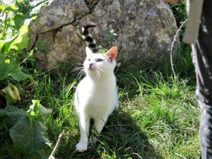 El gato que sabía de leyendas y buhoneros./ Foto J.M.