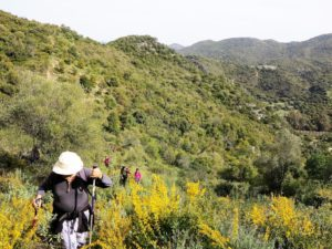 Las aulagas florecidas, que se antojaban mimosas, cuando te acercas muerden como pirañas./ Foto J.M.