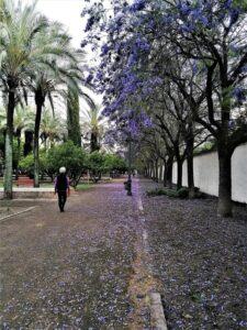 Jardines del Prado de San Sebastián, Sevilla./ Foto J.M.